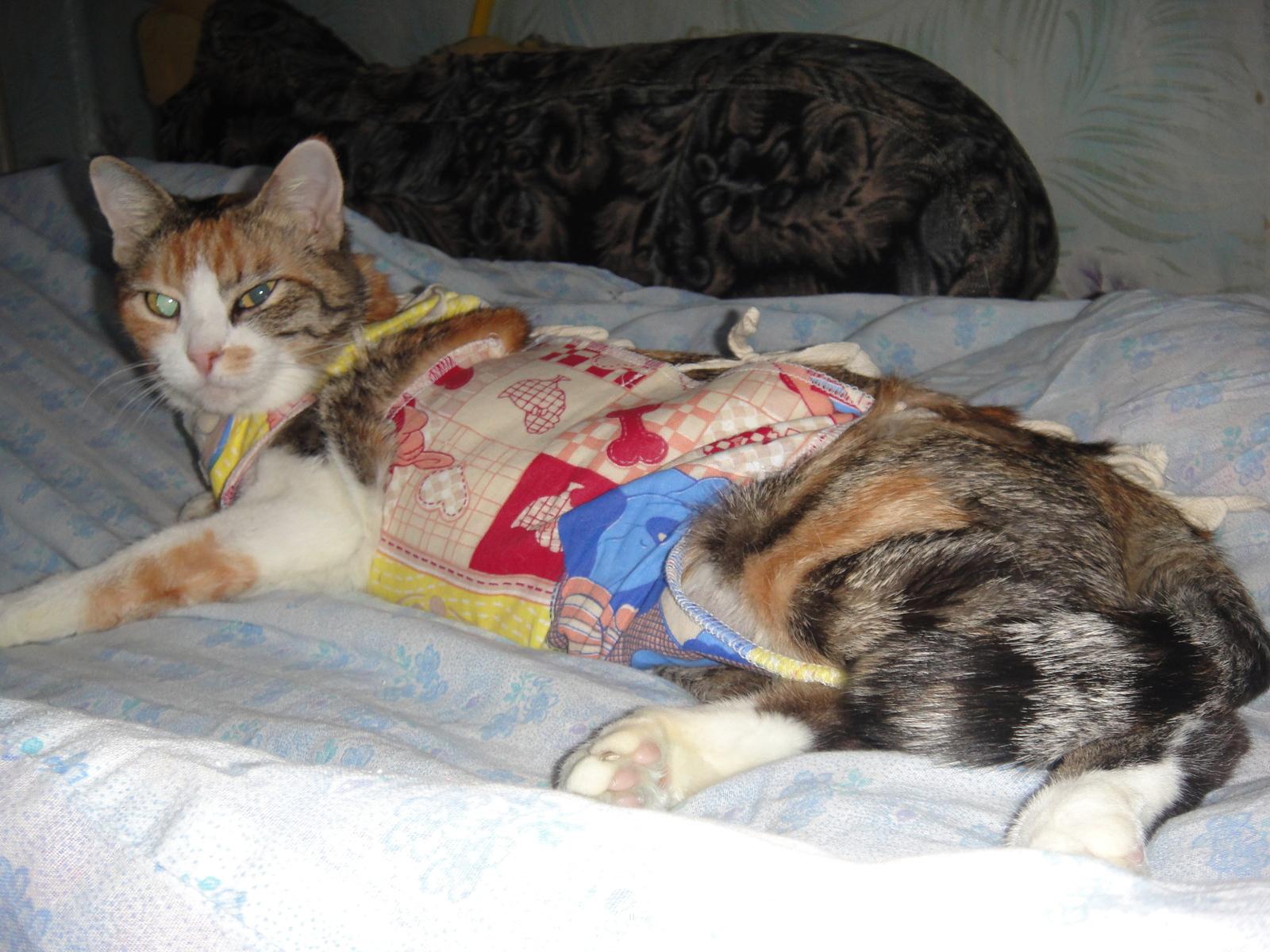 Как сделать так чтобы кот спал по ночам 175